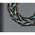 Boite Papillons n°10 Graphium
