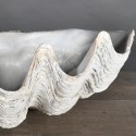 Bénitier TRICNADA CLAM blanc